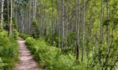 McCall Idaho Hiking Trails