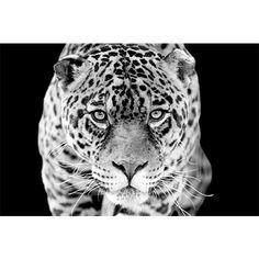 Jaguar, Panther, Wildlife, Van, Black And White, Prints, Animals, Lucien, Design