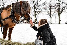 horse / sleigh / winter / snow