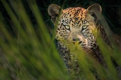 Pro photographers Karin De Winter and Jo Van Rossem share their insights on how to choose the right camera lens for wildlife photography. Nature Photography Tips, Wildlife Photography, Amazing Photography, Landscape Photography, Camera Lens, Cats And Kittens, Photoshop, Photographers, Van