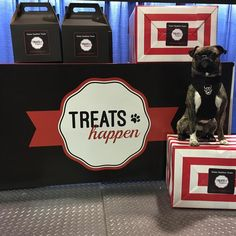Hanging at Treats Happen booth is one of @_dieselthebugg favourite past times we think :)