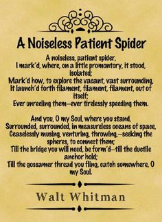 a noiseless patient spider analysis essay