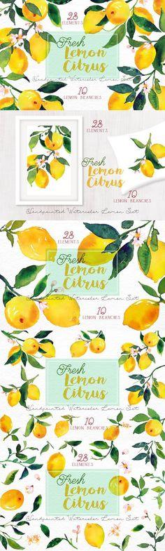 Lemon Citrus -Watercolor Set. Watercolor Flowers