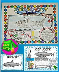 Shark Research for younger kids!  Teacher younger kids beginning research skills with this high interest Shark Facts pack. Perfect for Shark Week!