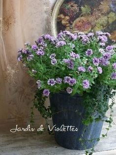 ペチュニア「リトルホリデー」を中心に。 八重咲きが豪華なペチュニアの存在感が生かされています。