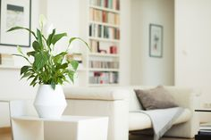 "Panta Rhei   growing memories   a ""green"" urn for your home.  www.pantarhei.com  (foto: Thomas Kirschner / k-works.at) Sustainable Design, Planter Pots, Urn, Product Design, Plant Pots"
