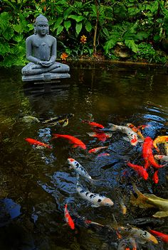 I've never seen a yellow and orange koi like the one at the back right.] Koi pond at Marie Selby Botanical Gardens Image Zen, Parks, Goldfish Pond, Porch Plants, Carpe Koi, Pond Water Features, Pond Design, Landscape Design, Garden Design
