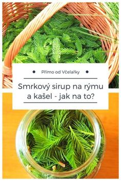Smrkový sirup na rýmu a kašel, recept jak na to, abyste byli na zimu zásobeni #smrk #recept #sirup Homemade Cosmetics, Natural Medicine, Organic Beauty, Home Remedies, Aloe, Green Beans, Herbalism, Bubbles, Food And Drink