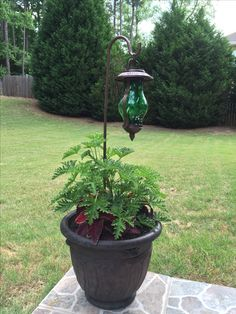 Two things: Citronella plant repels mosquitoes and the planter anchors the solar lighting on the patio.