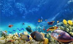 4 All-Time Best Snorkel Sites in and Around Playa del Carmen