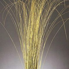 Google Image Result for http://www.curiouscountrycreations.com/images/large/products/dried-fountain-grass_LRG.jpg