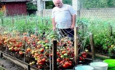 99 Unusual Vegetable Garden Ideas For Home Backyard - New ideas Garden Paths, Garden Beds, Garden Landscaping, Vegetable Garden For Beginners, Gardening For Beginners, Vegetable Gardening, Summer House Garden, Home And Garden, Landscape Design