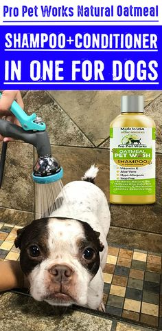 Our Oatmeal Dog Shampoo And Conditioner is recommended by Vets and Specially formulated for pets with allergies to food, grass and flea bites. Oatmeal Shampoo, Cat Shampoo, Shampoo And Conditioner, Dog Smells, Flea Treatment, Dog Eyes, Biodegradable Products, Allergies, Your Pet