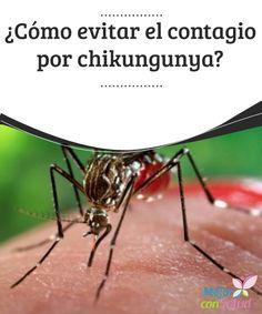 ¿Cómo evitar el contagio por chikungunya?  La enfermedad del Chikungunya se está propagando cada día con más fuerza. ¿A qué se debe? ¿Cómo podemos prevenirla?