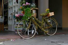 bicycle in flower shop near Public Market Center