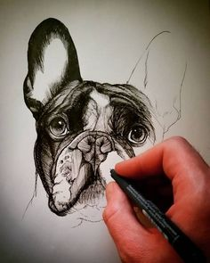 Frenchie , french bulldog , sketch , sketchbook , drawing