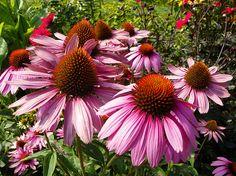August 9, 2012 Photos of Mount Desert Island, Maine! Thuya Garden!   Plein Aire in Maine