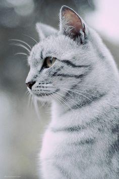 Such a beautiful cat !
