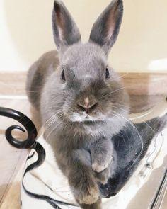 "Toppancs Bunny  (@toppancs.bunny) Instagram-hozzászólása: ""Have a good day everybunny❤ #bunny #rabbit #conejo #nyul #nyuszi #nyúl #coniglio #lapin"