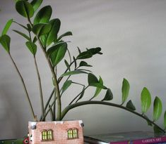 Written by someone who has killed many houseplants, this article extolls the virtues of the ZZ plant, the easiest and prettiest houseplant ever! Glossy, tough, healthy leaves and minimal requirements Zz Plant, Houseplants, Garden Art, Easy, Indoor House Plants, Yard Art, Potted Plants
