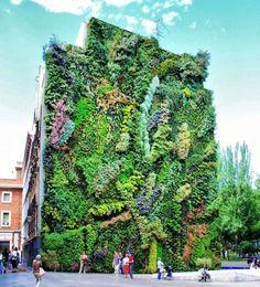 垂直庭園パトリック・ブラン CaixaForum Madrid, Madrid, Spain - Herzog & de Meuron and Patrick Blanc Green Architecture, Landscape Architecture, Vertical Planting, Vertical Gardens, Foto Madrid, Urban Nature, Oh The Places You'll Go, Beautiful Places, Around The Worlds