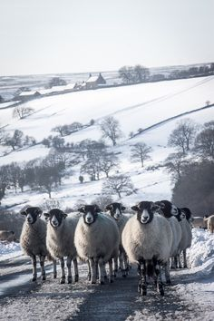 Some Photographs From A Snowy North York Moors. - Real Whitby - Post Anything You Like Here. - Real Whitby Forums Sponsored By Whitby Pie And Mash