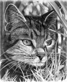 art animals - 30 Beautiful Cat Drawings Best Color Pencil Drawings and Paintings World Cat Day Aug 8 Amazing Drawings, Amazing Art, Graphite Drawings, Art Drawings, Hipster Drawings, Drawing Faces, Realistic Cat Drawing, World Cat Day, Pencil Drawings Of Animals