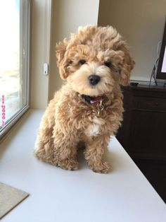Cute Puppy Pictures You Will Love Puppy, dogs, animals, lovely puppies, cute dogs. Cute Little Puppies, Cute Little Animals, Cute Dogs And Puppies, Cute Funny Animals, Doggies, Cutest Dogs, Adorable Puppies, Little Dogs, Big Dogs