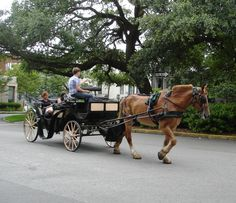 53 Best Found Photos Of Savannah Carriages Images Savannah Georgia