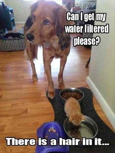 21 Funny Animal Pictures for Today #funnydogquotes