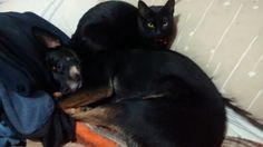 Mis niñas, Lola y Mora Cute Black Cats, Dogs, Gatos, Pet Dogs, Doggies