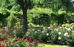 Rose Garden of the Royal Botanical Gardens, Hamilton Organic Horticulture, Garden Quotes, Garden Pictures, Spanish Style, Love Flowers, Lawn And Garden, Botanical Gardens, Curb Appeal, Garden Landscaping