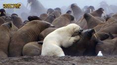 El Ártico no es un país o un continente, sino una región en el extremo norte del planeta. En esta región se encuentran pocas especies de animales.Por esto debemos tener conocimiento de que en este lugar existe vida, vida que estamos destruyendo mientras miramos hacia otro lado como si no pasara...  https://www.crazytech.eu.org/top-10-animales-mas-letales-del-artico/