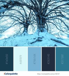 Color palette ideas from 693 winter images icolorpalette. Winter Images, Find Color, Bedroom Color Schemes, Spring Sign, Pastel Purple, Winter Colors, Color Pallets, Winter Snow, Color Palettes