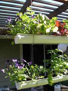 Hanging gutter...outdoor vertical garden!