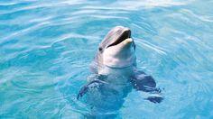 Bottlenose Dolphin Wallpaper Dolphins Animals Wallpapers) – Wallpapers For Desktop Dolphin Hd, Bottlenose Dolphin, Dolphin Memes, Dolphin Photos, 1920x1200 Wallpaper, Animal Wallpaper, Hd Wallpaper, Wallpaper Pictures, Worlds Cutest Animals