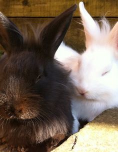 Bunnies Cuddle Up and Bask in the Sunlight - May 27, 2011