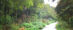 Pinned from the I Spy Camping blog: UK Autumn Walks