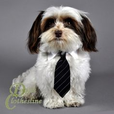Black Pinstripe Dog Necktie, SALE http://www.doggieclothesline.com/dog-neckties