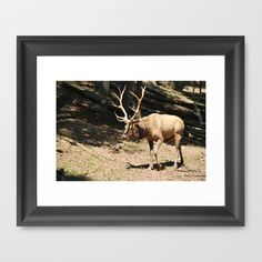 Elk side by Sarah Shanely Photography $31.00