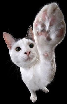 Caring for a Cat with a Swollen Paw #catsincarer - Care for cat at Catsincare.com!