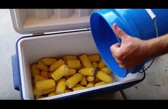 This Labor Day, Impress Guests By Cooking Corn In A Cooler