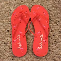 Splendid Flamingo Flip Flops