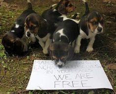 Esclusivo. Green Hill, parla uno degli attivisti che ha liberato i cuccioli.