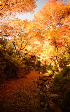 Vivid Autumn - Photos from Jeffrey Friedl