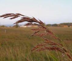 New Blog Post! When the Air Blows http://inspiritual.biz/stirring-my-spiritual-waters/2013/3/1/when-the-air-blows