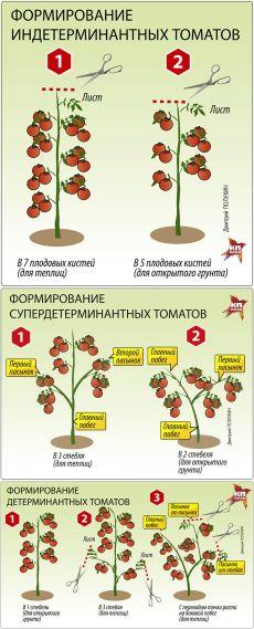 Помидорная наука. Варианты формирования томатных кустов