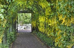 The bright yellow archway at Aikwood Tower, near Selkirk