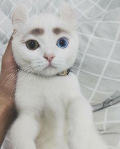 eyebrows #aww #cute #cutecats #dinkydogs #animalsofpinterest #cuddle #fluffy #animals #pets #bestfriend #boopthesnoot