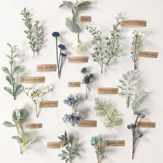 22 Fabulous Sage Wedding Ideas – Boutonnieres Looking for a wedding colour that refreshing, tender, exquisite and very relaxing? that's sage wedding color for your wedding! Sage is one of the classical color combos, which… Sage Wedding, Blue Wedding Flowers, Wedding Flower Arrangements, Floral Wedding, Wedding Colors, Wedding Bouquets, Floral Arrangements, Wedding Greenery, Greenery For Bouquets